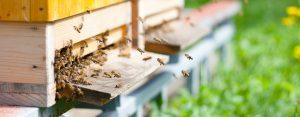 Beekeeping Club Insurance img