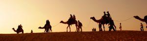 Camel riding insurance img
