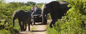 Safari insurance img