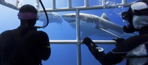shark cage diving insurance img