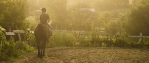 horse riding insurance