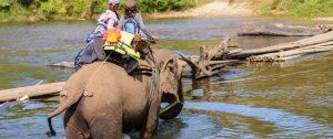 elephant riding insurance