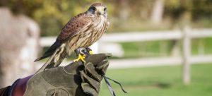 falconry insurance