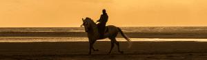 pony trekking insurance
