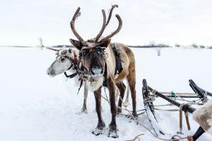 reindeer sledding insurance