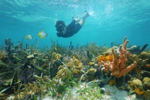 snorkelling insurance