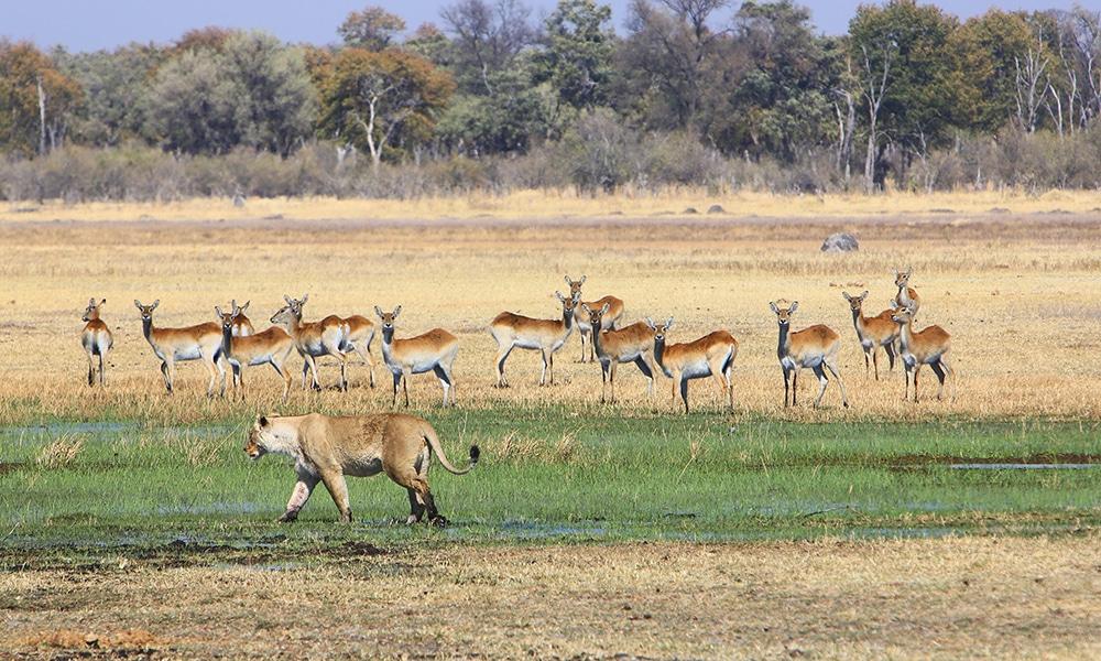 horse trek okavango