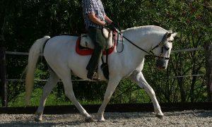 horse-trek-portugal