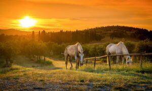 horse trek tuscany