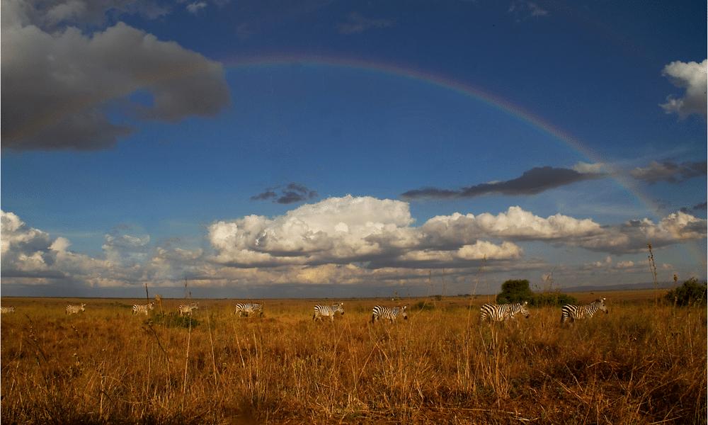Kenya Wildlife Marathon Rainbow