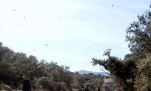 Salamanca Valley