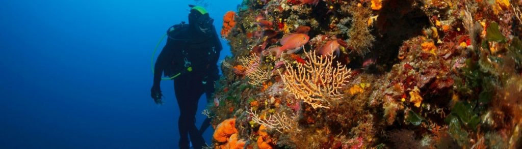 Scuba Diving Travel Insurance - Cover For Divers   SportsCover Direct